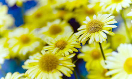 Arnica:  A Staple for Every Medicine Chest
