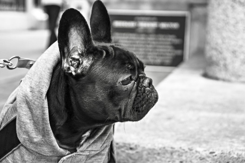 A Self-love Story About a Woman, a Man, and a French Bulldog Named August