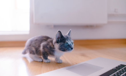 How Cat Poop On My Computer Helped Me To Realize My Many Blessings (And A Few Holiday Stress-Relieving Tips)