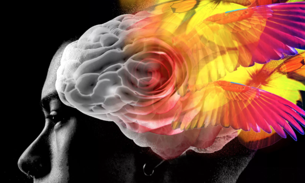 Vox: The extraordinary therapeutic potential of psychedelic drugs, explained