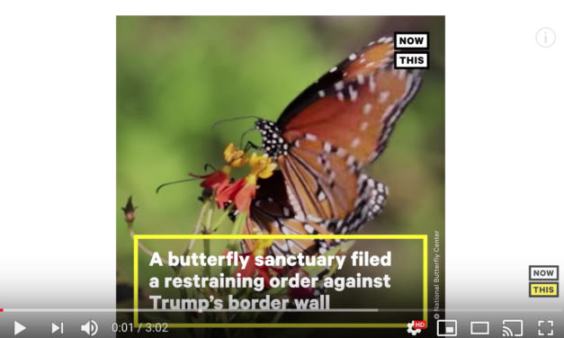 How Butterflies Are Fighting Trump's Border Wall | NowThis