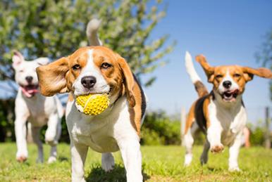 5 Springtime Adventure Ideas for You and Your Pet