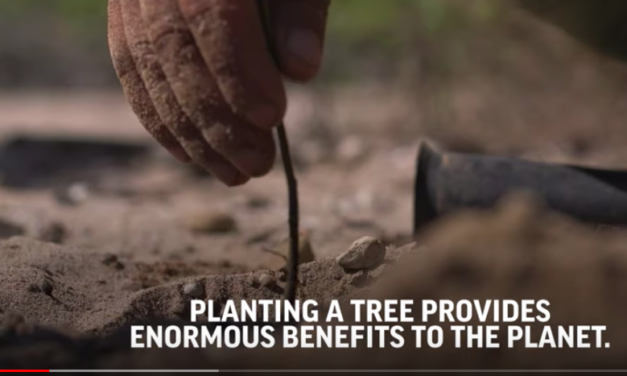 Episode 3 – Taking Root | What Can Be Saved? | AP