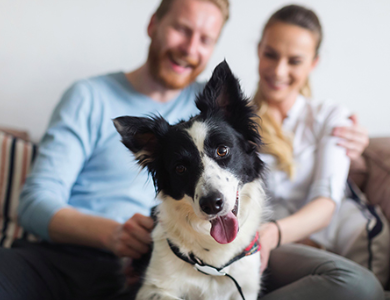 5 Ways to Help Keep Your Dog Happy and Healthy